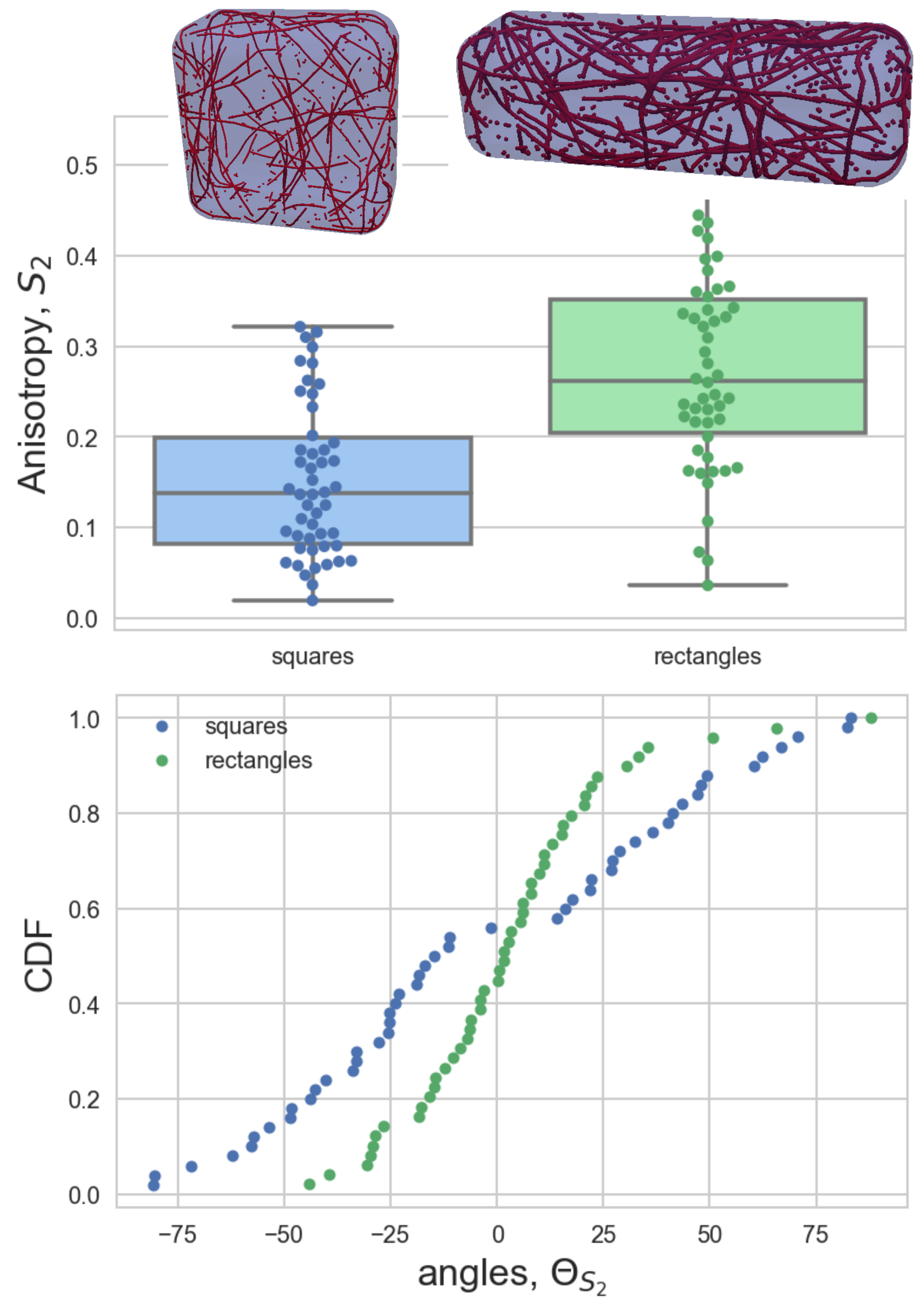 3D model simulations for microtubules in a rectangle and square cell geometry (Tamsin Spelman)