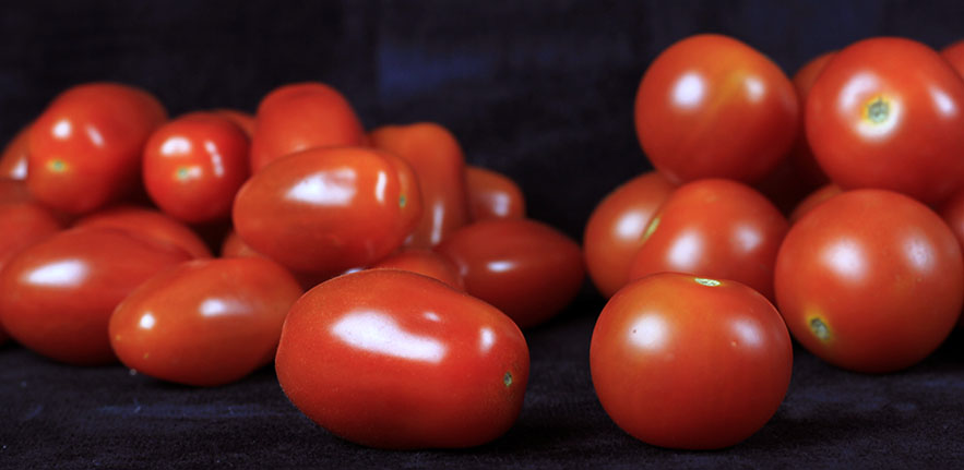 Rider transposons are well-known for causing the elongated shape that we see in plum tomatoes, but new research has found they may also play an important role in a plant's response to drought.