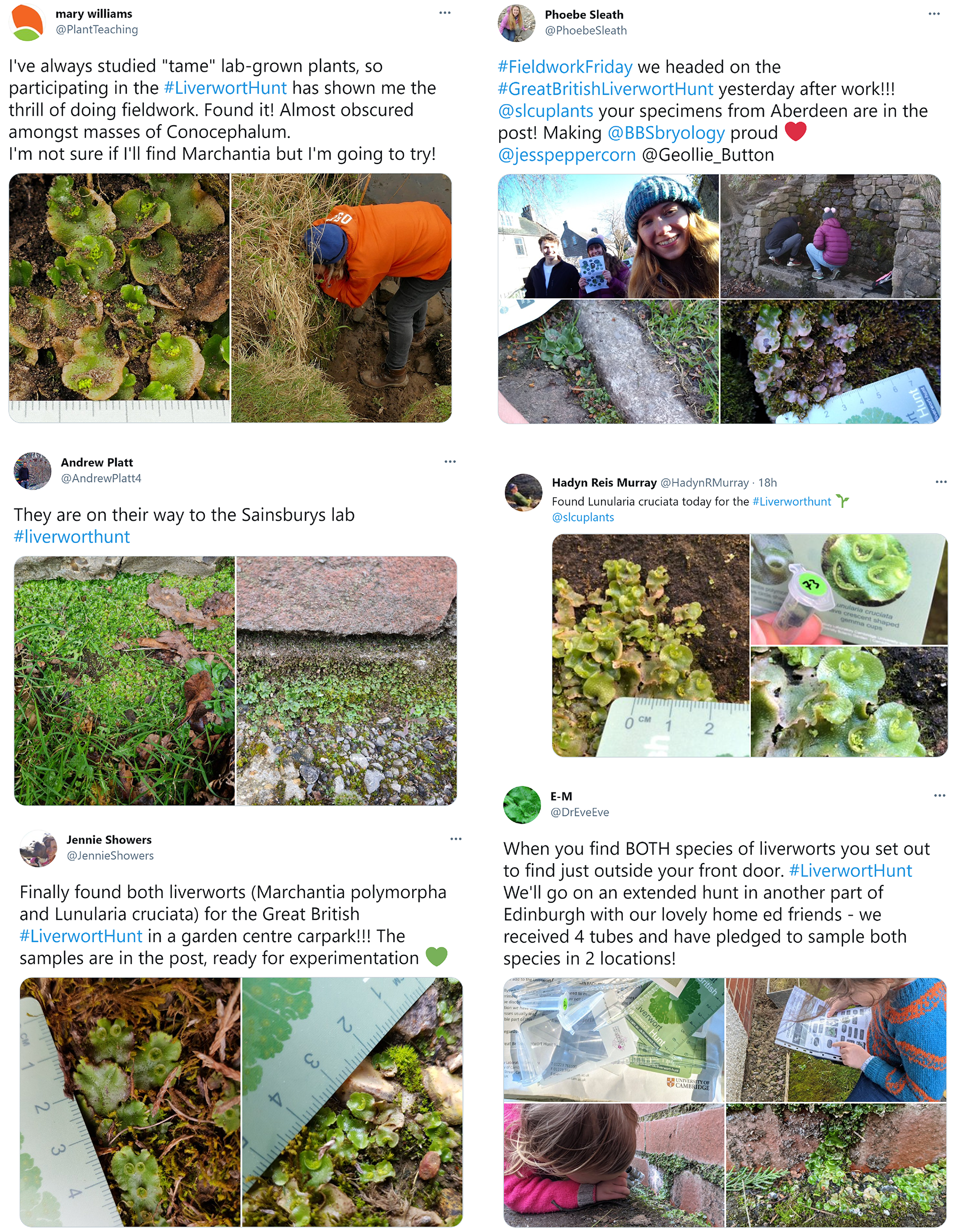 Montage of photos Tweeted by Liverwort Hunters when out collecting in the field