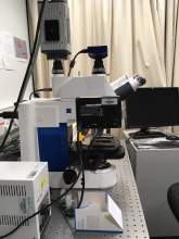 Zeiss Axioimager microscope with Vivatome