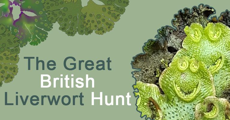 The Great British Liverwort Hunt poster