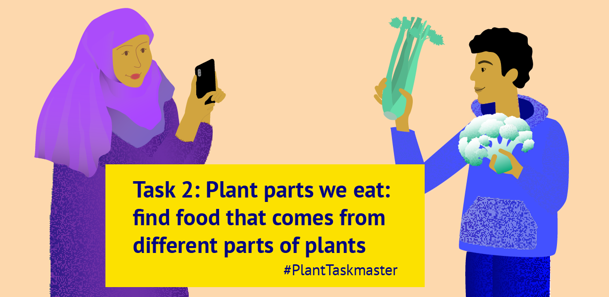 Task 2: Plants parts we eat (banner)